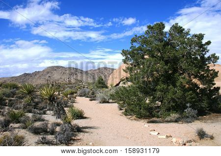 Hiking trail at Pine City, Joshua Tree National Park, CA