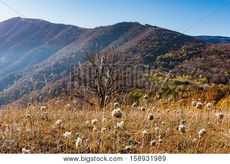mountain meadow in nice autumn day