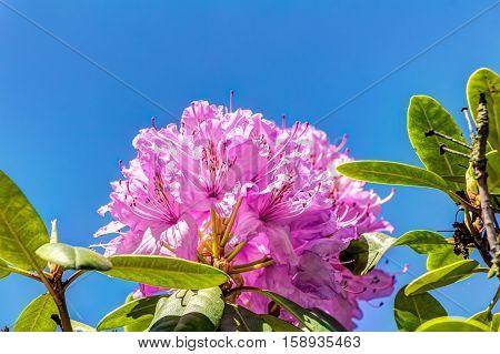 Azalea and Rhododendron Park in Kromlau - in full bloom