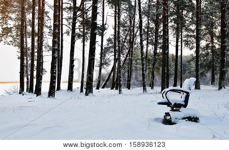 office chair is in the winter forest. The snowdrift. Concept photo of freelancing. The freedom to work in any situation anywhere.