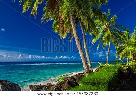 Coconut palm trees over the tropical beach of Rarotonga, Cook Islands, South Pacific