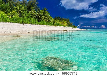 Tropical swimming beach with palm trees on west side of Rarotonga, Cook Islands