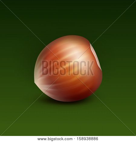 Vector Full Unpeeled Realistic Hazelnut Close up Isolated on Green Background