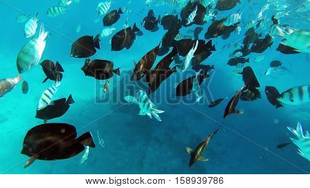 Red sea reef tropical fishes underwater in Egypt
