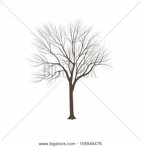 Ash-tree Without Leaves