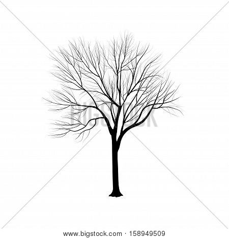 Silhouette: An Ash-tree Without Leaves