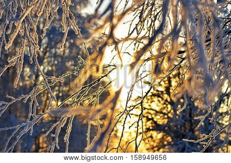branch covered with frosty rime. winter macro picture. frosty winter sunny day. Beauty! sunset through the frost. texture winter background