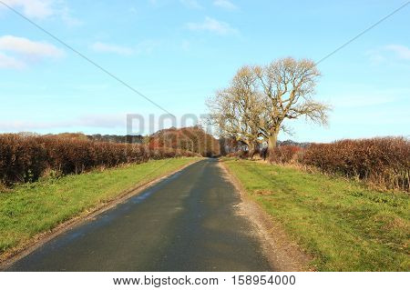 A country road with hedgerows and grass vergesand a lone Ash tree in the scenic English landscape of the Yorkshire wolds in autumn or fall