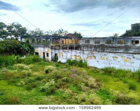 Bosque creciendo en las ruinas de la ciudad