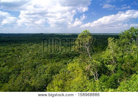 Jungle in Mexico at a Yucatan penninsula
