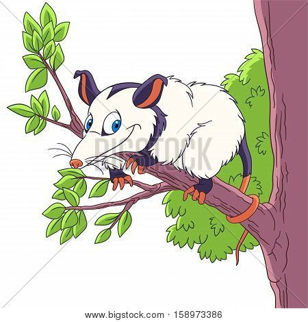 Cute and happy cartoon opossum animal isolated on white background. Childish vector illustration and colorful book page for kids.