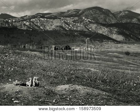 Prairie dogs on alert near the Front Range mountain north of Golden Colorado.