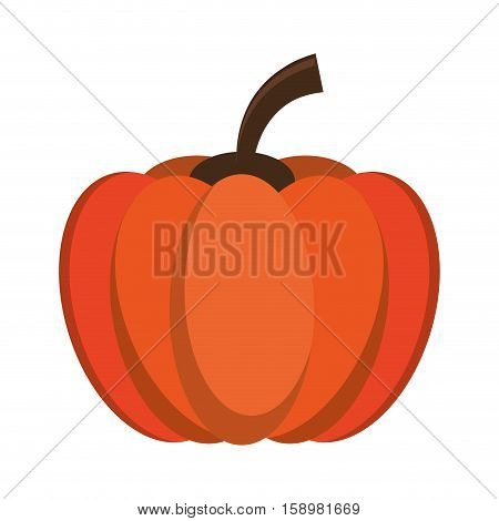 pumpkin harvest bittersweet vegetable icon vector illustration eps 10