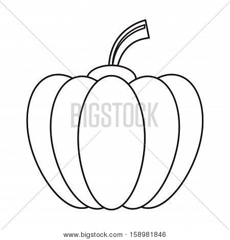 outline pumpkin harvest bittersweet vegetable icon vector illustration eps 10