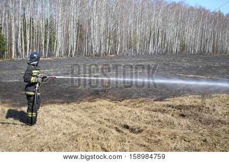 MOSCOW - APR 12, 2015: Firefighter with a hose extinguish a burning dry grass along the birch grove in the spring