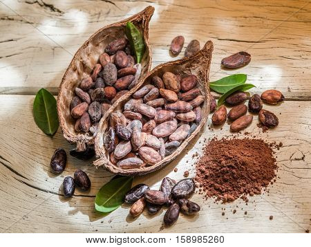 Cocoa powder and cocoa beans on the wooden table.