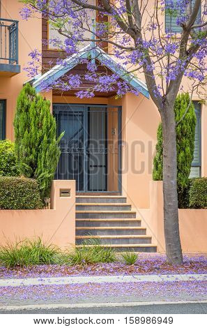 A jacaranda tree blooming in front of a townhouse in the suburb of Subiaco in Perth, Western Australia.