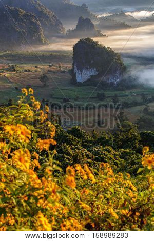 Beautiful Sunrise of travel place with morning mist by mexican sunflower foreground at Phu Langka National Park in Phayao Province Thailand