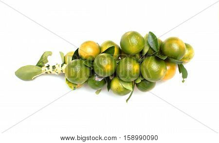 Oranges background on white for food fruits.