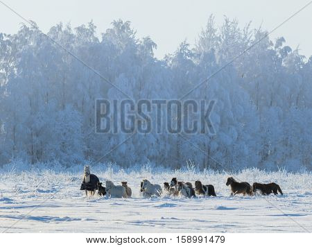 Group of ponies and miniature horses on snowfield