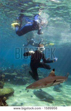 Sharkdivers