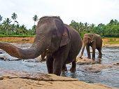 big herd of elephants crossing a river poster
