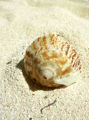 closeup of a shell in the sand on a tropical beach poster