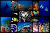 Collage of the colorful underwater life in Asia poster