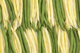 fresh green and yellow bean a arranged vertically