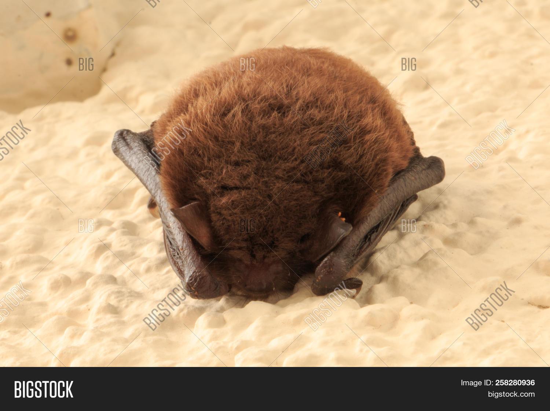Bat Sleeps On House Image Photo Free