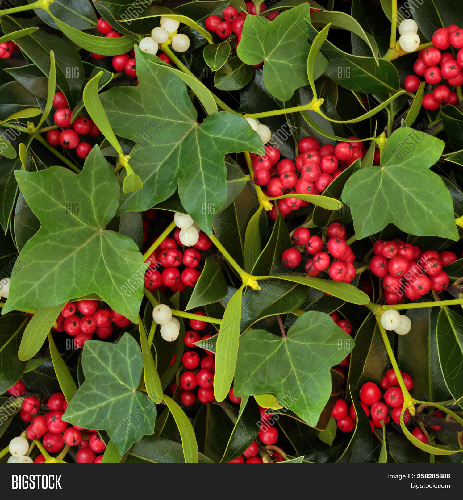 Mistletoe And Ivy