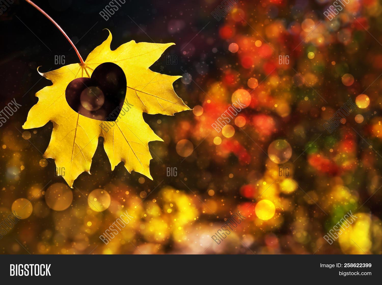 Autumn Leaf Heart Image Photo Free Trial Bigstock