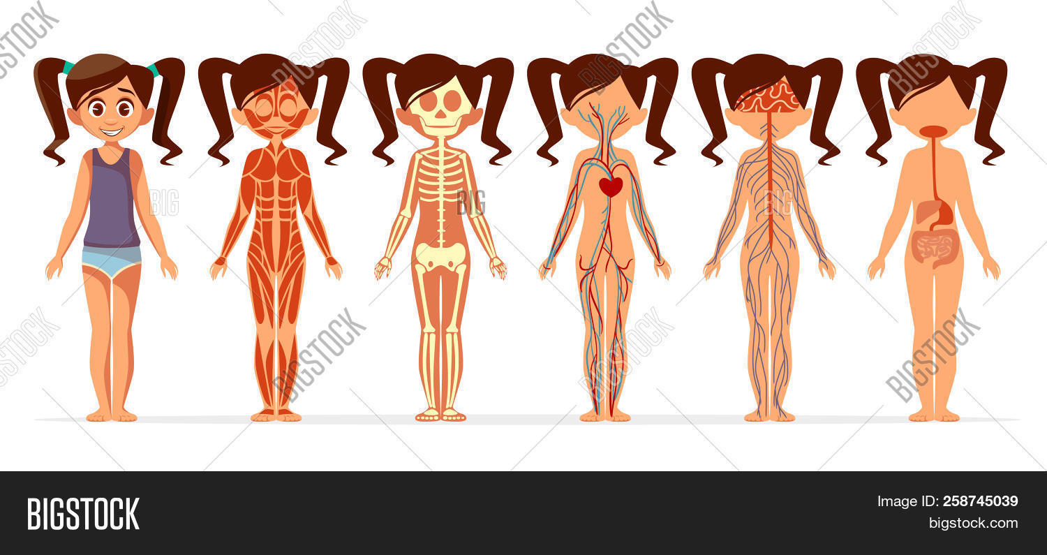 Girl Body Anatomy Image & Photo (Free Trial) | Bigstock
