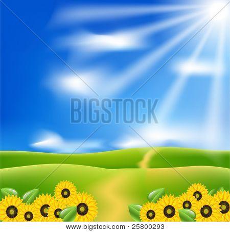 Vector landscape with sunflowers, blue sky and sunburst