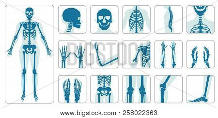 Human Bones Orthopedic And Skeleton Icon Set On White Background, Bone X-ray Image Of Human Joints,