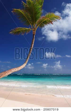 Exotic Carribean beach with palm tree