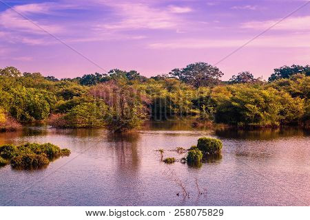Yala National Park, Sri Lanka, Asia. Beautiful Lake And Old Trees. Forest In Sri Lanka, Big Stone Ro