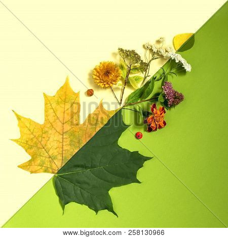 Contrast Of Summer And Autumn On Example Of Leaves And Flowers. Concept Of Seasonal Changes. Minimal