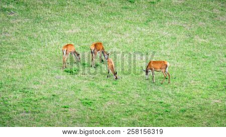 An image of four red deer in the green meadow