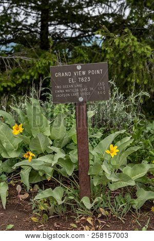 Grand View Point Sign At Trail Junction In Tetons Wilderness