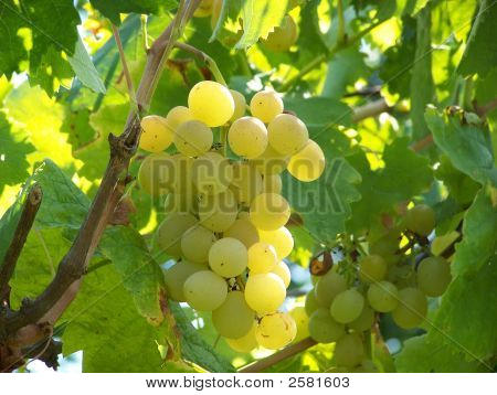 Sweet White Grapes