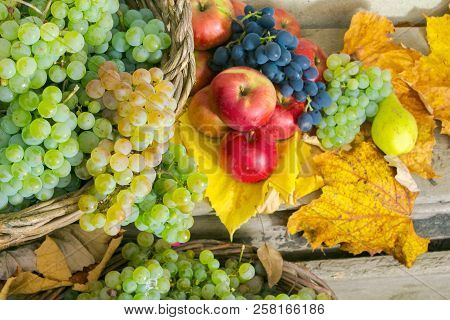 Autumnal Harvest Still Life With Apples, Pears, Grapes, Nuts And Berries In Foliage On Wooden Board.