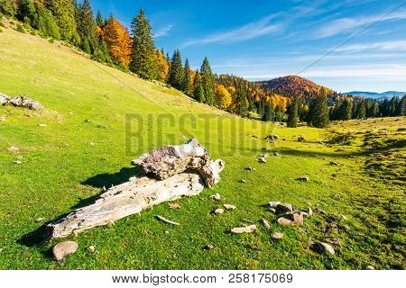 Log On A Grassy Hill In Apuseni Natural Park. Mountain With Deciduous Forest In Yellow Foliage In Th