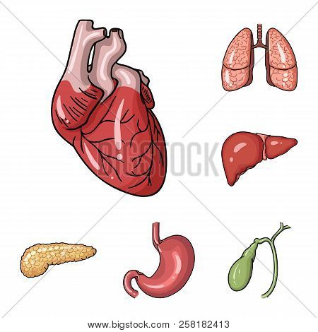 Human Organs Cartoon Icons In Set Collection For Design. Anatomy And Internal Organs Vector Symbol S