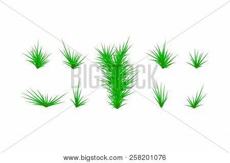 Set Of Green Grass. Green Grass White Background. Vector Illustration