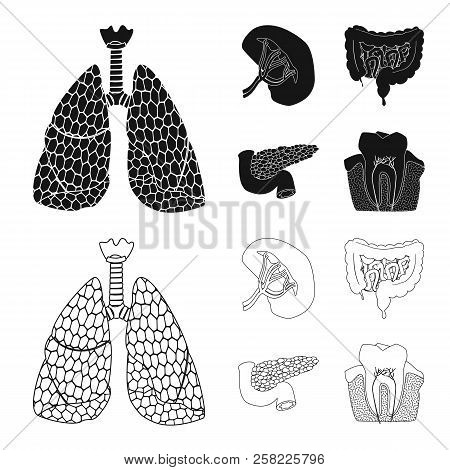 Vector Illustration Of Body And Human Symbol. Set Of Body And Medical Vector Icon For Stock.