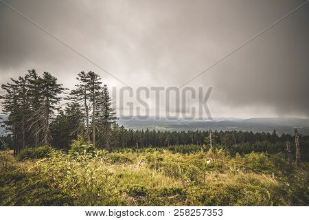 Wilderness Landscape In Cloudy Weather Overcast With A Pine Tree Forest