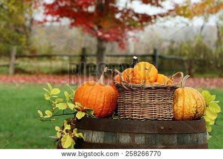 Pumpkins and gourds on old barrel
