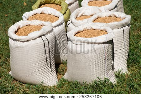 Bags With Wheat Close-up. Wheat In A Bag. Nylon Bags