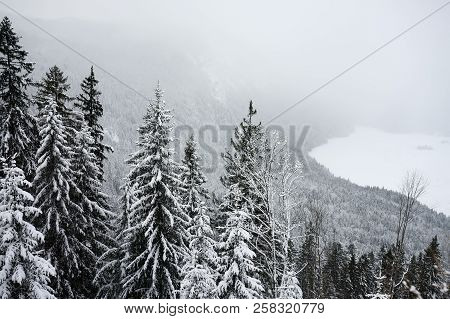 Scenic View With Pine Forest Of The Bavarian Alps In Winter. Snowy Day In The Mountains. Bavaria, Ge